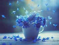 Beautiful Photography Art Flowers