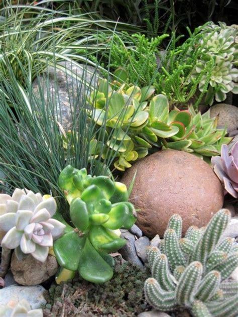 california native plant design images