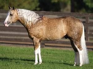 Hästuppfödning Hawkhill.se
