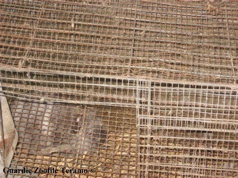 Coniglio In Gabbia - oipa teramo gli interventi delle guardie oipa teramo a