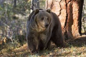 What You Need To Know About Bear Safety