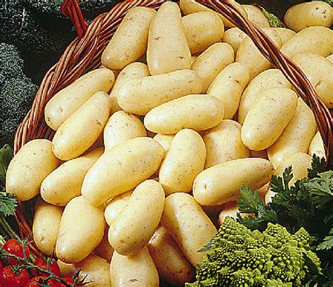 el jadida la pomme de terre 224 l honneur mazagan24
