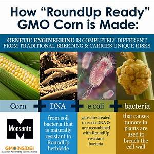 Avoid Gmo U0026 39 S And Improve Your Health