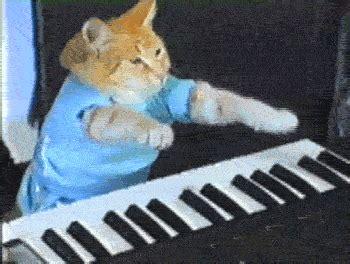 Cat Playing Piano Meme - bilboquet magazine l 246 lkatting plong 233 e dans l enfer des 171 chats