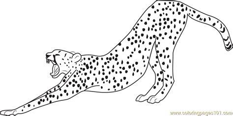 stretching cheetah coloring page  cheetah coloring