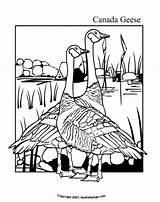 Coloring Goose Canada Geese Colouring Printable Gans Canadian Crafts Ausmalbilder Popular Sheets Activities Preschool Letzte Seite sketch template