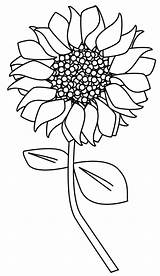 Sunflower Outline Clipart Clip sketch template