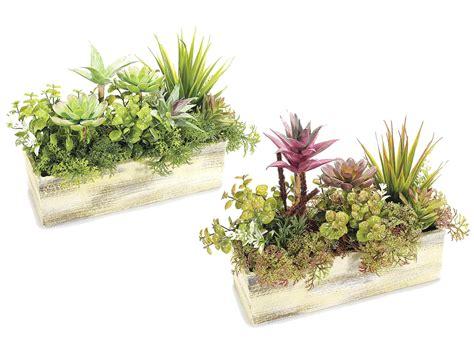 vaso piante composizione piante grasse in vaso con composizione piante