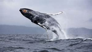 Blue Whale Wallpapers - Wallpaper Cave