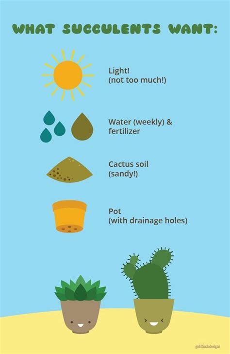 super informative succulent care poster enjoy