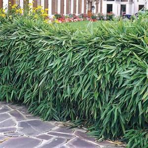Welche Pflanzen Eignen Sich Als Sichtschutz : heckenpflanzen ausw hlen und eine sch ne hecke gestalten ~ Sanjose-hotels-ca.com Haus und Dekorationen