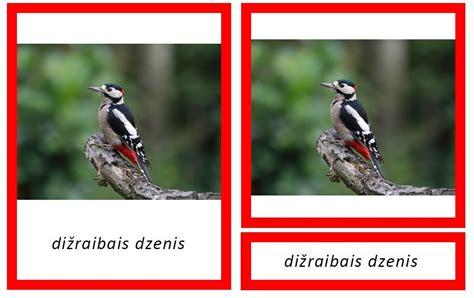 Meža putni - Dzīvnieku pasaule - Veikals - MOMtesori