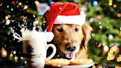 Christmas Dog Animal Wallpapers Desktop Puppy Dogs