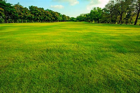 Best Grass Field Stock Photos, Pictures & Royalty-free