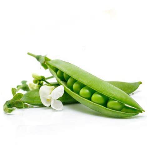 cuisiner haricots verts frais le petit pois préparer cuire associer cuisiner