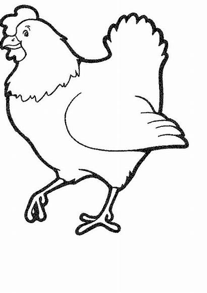 Coloring Chickens Pages Hens Animals Chicken Farm
