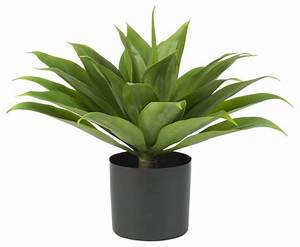 Outdoor Potted Plant For Modern Patio Entertaining