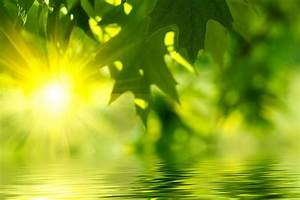 Nature Trees Forest Sunlight Fresh New Hd Wallpaper ~ Clipgoo