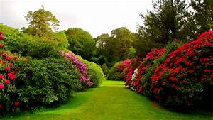 flowers bushes lawn grass buds garden HD Wallpaper #8994