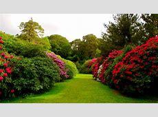 flowers bushes lawn grass buds garden HD Wallpaper #8994