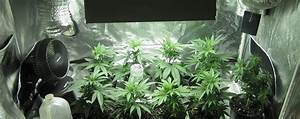 Led Grow Set : how to set up a grow tent for beginners ~ Buech-reservation.com Haus und Dekorationen