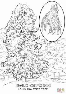 Louisiana State Tree coloring page | Free Printable ...