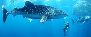 Belize Vacation Packages: All Inclusive Belize Vacation
