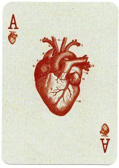 bhf auction ideas cardiovascular system images