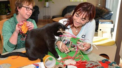 katzenspielzeug selbst gemacht katzenspielzeug marke eigenbau