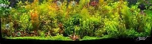 Pflanzen Für Aquarium : sch ne aquariumpflanzen tipps und tricks ~ Buech-reservation.com Haus und Dekorationen
