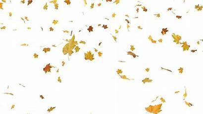 Falling Leaf Leaves Autumn Pngkey Freepngimg