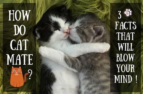 how do cats mate how do cats mate 3 facts that will blow your mind tinpaw