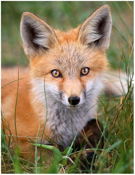 fox friday  day