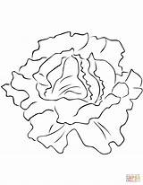 Lettuce Coloring Lechuga Colorear Colorare Printable Verduras Vegetales Planta Insalata Disegni Dibujo Imagenes Dibujos Disegno Hojas Tomate Pintar Dibujar Hoja sketch template