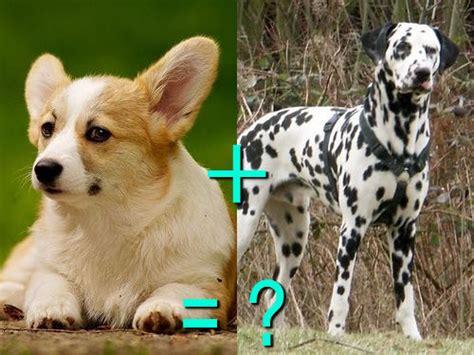 black spots in tamil nadu 遺伝子すごい 別種の犬をかけあわせたミックス犬 両親と比べた写真21組 らばq