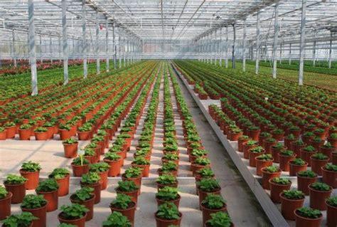 wur bloemen market intelligence tuinbouw wur