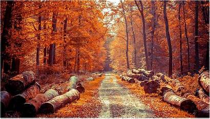 Autumn Forest Wallpapers Backgrounds Desktop Wise Vibrant