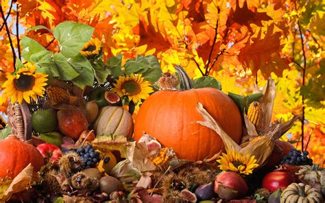 Background Thanksgiving Wallpaper Hd by Thanksgiving Backgrounds Pictures Images