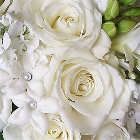 white roses    bunches pots london