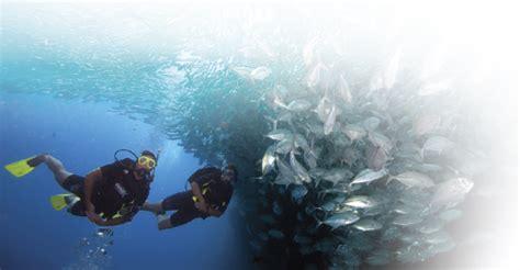bimini   bahamas bimini undersea