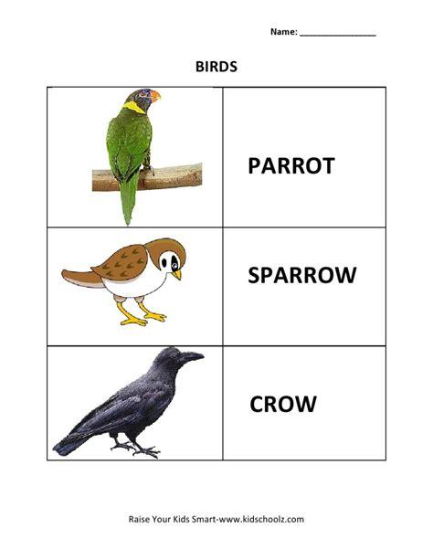 learning worksheets for kindergarten birds printable