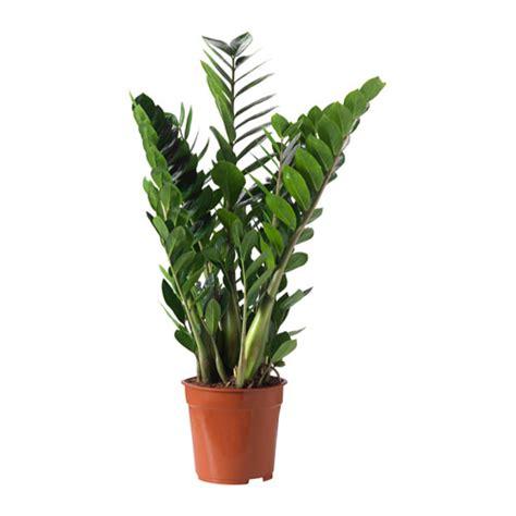 esszimmer düsseldorf zamioculcas pflanze ikea