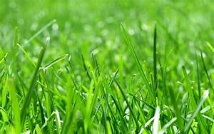 Nature grass sunlight macro depth of field wallpaper ...