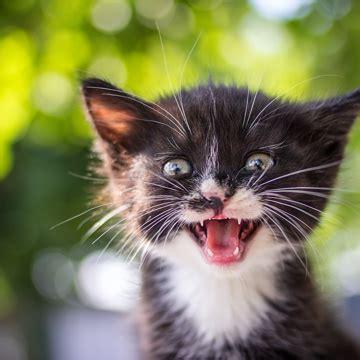 cutest cat photo contest