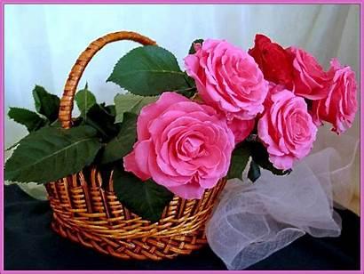Night Flowers Rose Flores Gifs Roses Fleurs