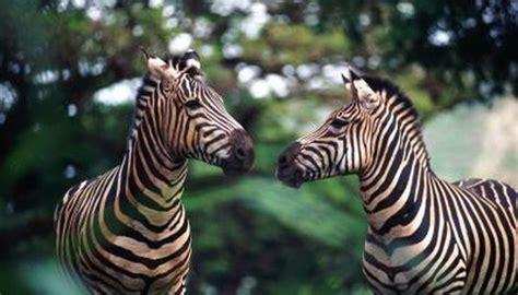 arbuckle wilderness same animal park sound animals zebras horses exotic getty oklahoma admission foxx stockbyte john