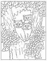 Coloring Raccoons Mr Tree Adron Printable Raccoon sketch template