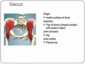 Major Muscles CYQ Level 3
