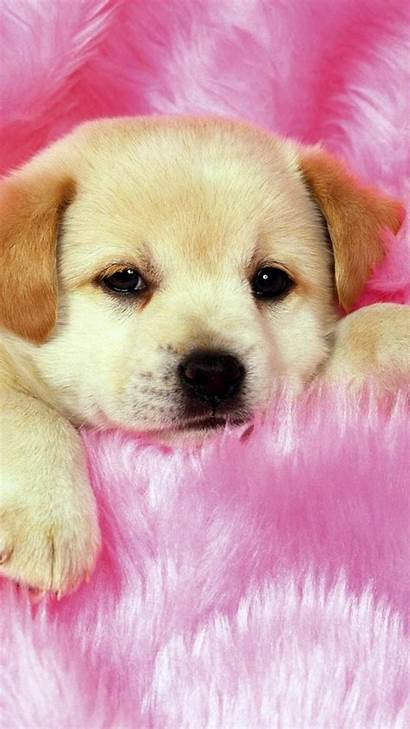 Puppy Puppies Wallpapers Backgrounds Really Puppys Adorable