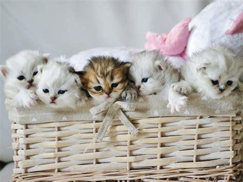image fond d cran chaton mignon fonds d cran gratuits de chats et de chatons animaux fonds d
